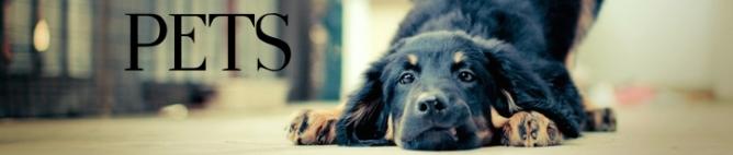 animals dogs friends pets 2560x1600 wallpaper_www.wallpaperfo.com_42 copy