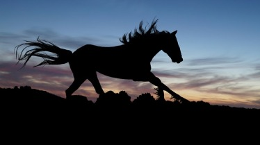 horse-654840_640