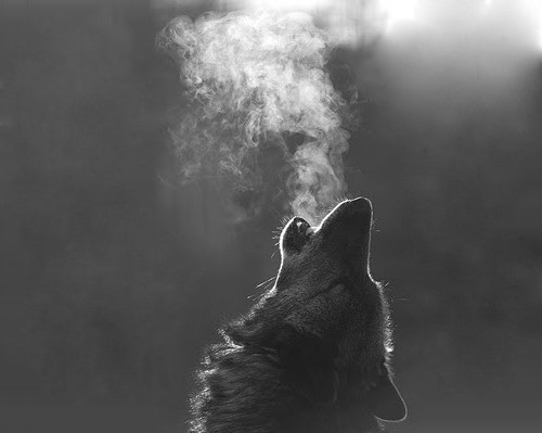 wolf mist