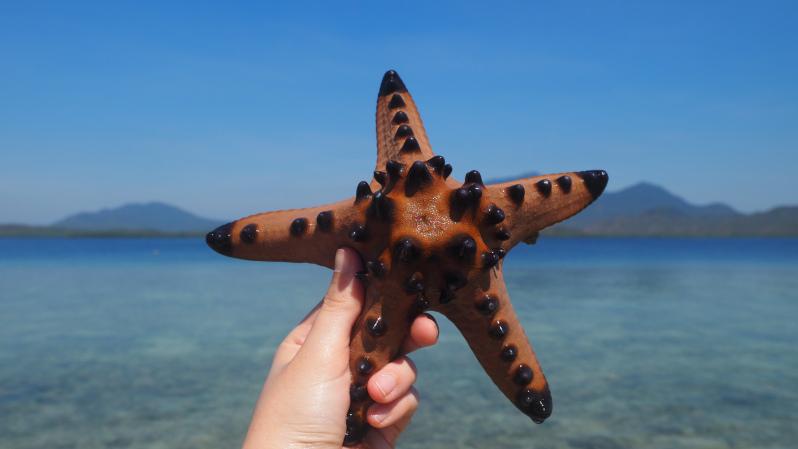 starfish-island-puerto-princesa