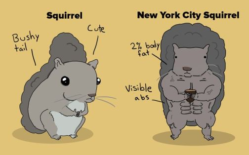 http---mashable.com-wp-content-gallery-new-york-city-animals-and-animals-everywhere-else-Squirrels